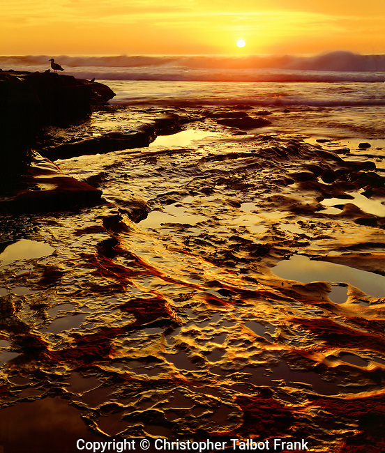 USA; California; San Diego.; La Jolla Tidepools on the Pacific Ocean at Sunset