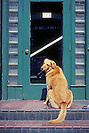 Yellow Lab At Doorway