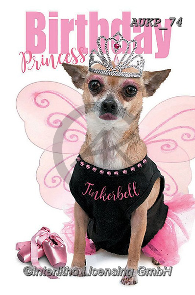 Samantha, ANIMALS, REALISTISCHE TIERE, ANIMALES REALISTICOS, funny photos, photos+++++,AUKP74,#a#, EVERYDAY ,party