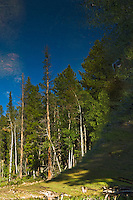 Early morning reflection of pine trees in a placid high altitude lake in the Rocky Mountains in Colorado.