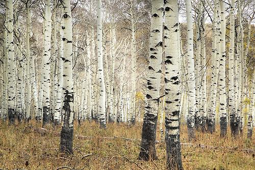 Fall has arrived at Kolob Terrace near Zion National Park, Utah