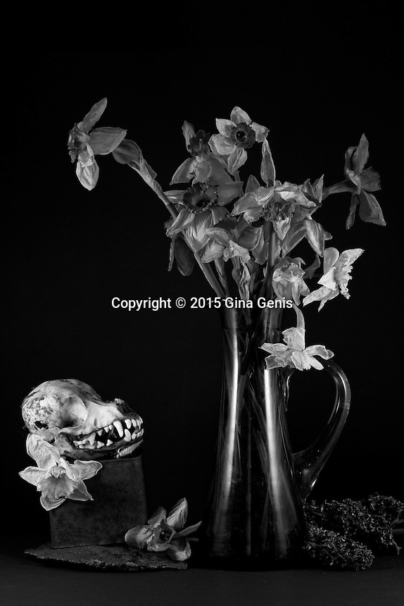 Still life photograph with dog skull, vase, and withering lilacs
