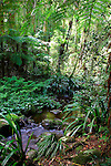 Brindle Creek, Border Ranges National Park, NSW