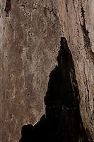 Frei Inocencio_MG, Brasil...Tronco de arvore queimada em Frei Inocencio, Minas Gerais...Burned trunk tree in Frei Inocencio, Minas Gerais...Foto: LEO DRUMOND / NITRO