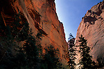 Red rock canyon walls along the Taylor Creek trail, Kolob Canyons, Zion National Park, UTAH