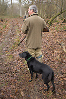 During a winter rough shoot in Kent, England, one of the guns waits with his labrador dog while another gun dog works part of a wood hoping to sniff out pheasants and get them up into the air to be shot.