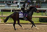 October 30, 2018 : Pocket Dynamo in preparation for the Breeders' Cup on October 30, 2018 in Louisville, KY.  Candice Chavez/ESW/CSM