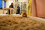 February 26, 2012, Tokyo, Japan - Rabbits are seen roaming the floor at a rabbit cafe where customers can come in to have a drink and play with rabbits. (Photo by Christopher Jue/AFLO)