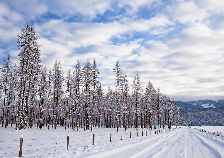 Snow-covered Tamarack trees are seen along a snow-covered road in North Idaho.