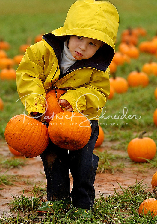 A young boy attempts to load up an armful of Halloween pumpkins during his visit to a pumpkin patch in North Carolina.