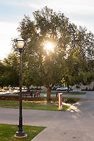 Sun shines through an oak tree in the quad, Dec. 2, 2015.<br /> (Photo by Marc Campos, Occidental College Photographer)