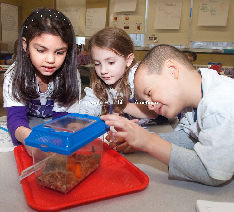 WATERBURY CT- JANUARY 07 2015 010715DA03- Kindergarden students of Brass City Charter School in Waterbury, from left, Rylan DeVeau, Izabella Testa and Yamil Romero, study crickets during a new science program that was a collaboration between the Connecticut Science Center,  Brass City Charter School and The Leever Foundation.<br /> Darlene Douty Republican American
