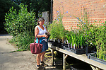 Woman examining plants for sale at Sissinghurst castle gardens, Kent, England, UK