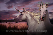 Bob, ANIMALS, horses, photos, GBLA70SF,#A# Pferde, caballos