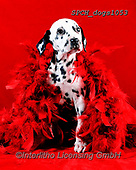 Xavier, ANIMALS, REALISTISCHE TIERE, ANIMALES REALISTICOS, dogs, photos+++++,SPCHDOGS1053,#a#, EVERYDAY