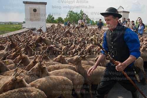 A traditional Hungarian shepherd walks front of his Racka sheep in the Great Hungarian Plain (Puszta) in Hortobagy, 200 km (124 miles) east of Budapest, April 30, 2011. Every spring around St. George's Day, Hortobagy celebrates the beginning of the new grazing season. ATTILA VOLGYI