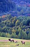 Elk, Mountains, PA landscapes, Elk Co., PA