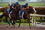 HALLANDALE BEACH, FL - JANUARY 27: Kentucky Derby hopefulls Hollywood Star (outside) and Free Drop Billy work the best of the morning at Gulfstream Park Race Track on January 27, 2018 in Hallandale Beach, Florida. (Photo by Alex Evers/Eclipse Sportswire/Getty Images)