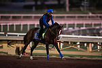 OCT 24: Kingly gallops at Santa Anita Park in Arcadia, California on Oct 24, 2019. Evers/Eclipse Sportswire/Breeders' Cup