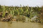 A Human body lies in the water after  Cyclone Nargis hits Irrawaddy Division, May 10, 2008. Despairing survivors in Myanmar awaited emergency relief on Friday, a week after 100,000 people were feared killed as the cyclone roared across the farms and villages of the low-lying Irrawaddy delta region. The storm is the most devastating one to hit Asia since 1991, when 143,000 people were killed in neighboring Bangladesh. Photo by Eyal Warshavsky  *** Local Caption *** ëì äæëåéåú ùîåøåú ìàéì åøùáñ÷é àéï ìòùåú áúîåðåú ùéîåù ììà àéùåø