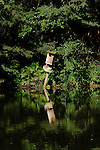 Birdhouse on pond