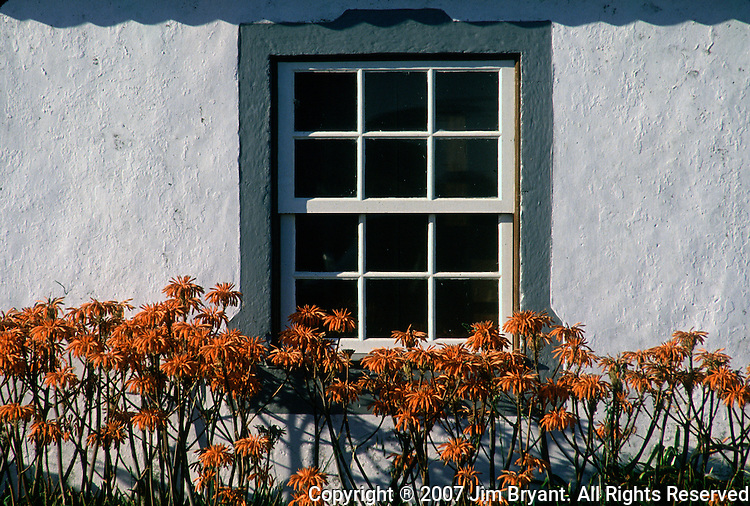 Colorful orange flowers grow against the backdtop of a white cottage wall on Terceira, Azores. Far out in the Atlantic Ocean, some 850 miles off the western coast of Lisbon, Portugal lies the 425-mile long archipelago of the Azores. (Jim Bryant Photo).....
