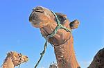 Essaouria, Morocco 2013