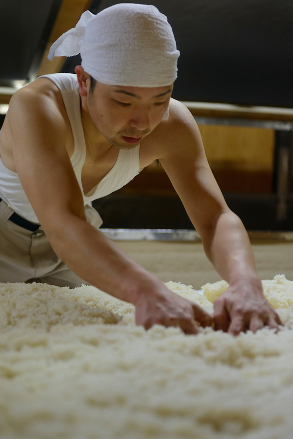 """Brewery worker making koji (steamed rice and koji mold spores). Tsuji Honten Sake, Katsuyama town, Okayama Prefecture, Japan, January 31, 2014. Tsuji Honten was founded in 1804 and has been at the cultural centre of the town of Katsuyama for over two centuries. 34-year-old Tsuji Soichiro is the 7th generation brewery owner. His elder sister, Tsuji Maiko, is the """"toji"""" master brewer."""