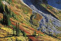 Fall colored meadows, Paradise Valley, Mount Rainier National Park, Pierce County, WA