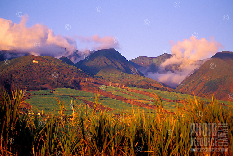 The West Maui Mountains near Lahaina, viewed across sugar cane fields at sunset