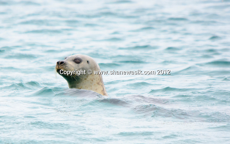 An inquisitive seal comes over to check us out