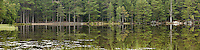 Panoramic view of reflections on Loch Garten, Abernethy Forest National Nature Reserve, Cairngorms National Park, Scotland, Uk