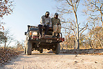 African Lion (Panthera leo) trackers, Christopher Muduwa and Timbo Frackson, looking for tracks during transect, Kafue National Park, Zambia