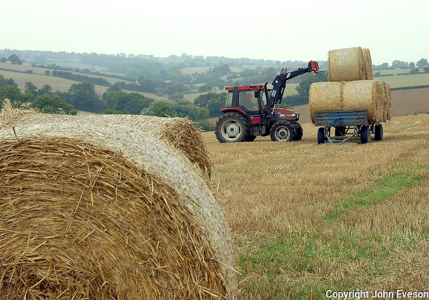 Loading bales of wheat straw in Oxfordshire for bedding dairy cows.