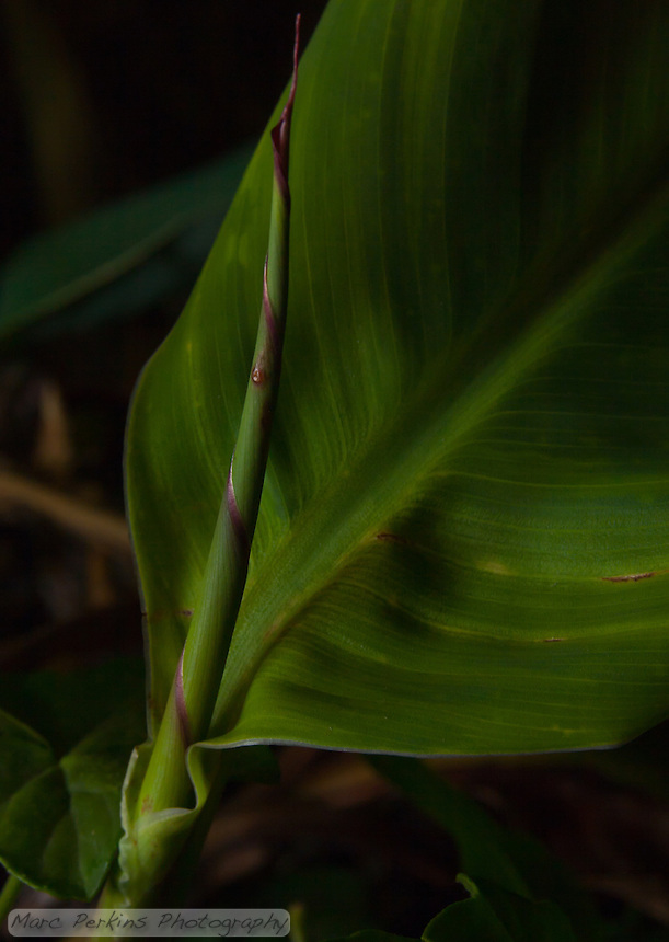 A young canna lily stem with a single leaf emerges from near the soil line.  This feels like a well-shaded jungle floor, to me.