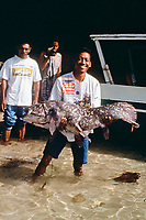 Indonesian coelacanth, Latimeria menadoensis, a living fossil, Bunaken National Park, Indonesia, Pacific Ocean