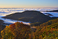 View of autumn colors and fog from an overlook along Skyline Drive in the south district of Shenandoah National Park