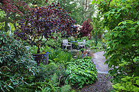 Path through mixed border with pot containing Purpleleaf contorted filbert tree (Corylus avellana) to secret garden room wiht table and chairs; O'Byrne Garden