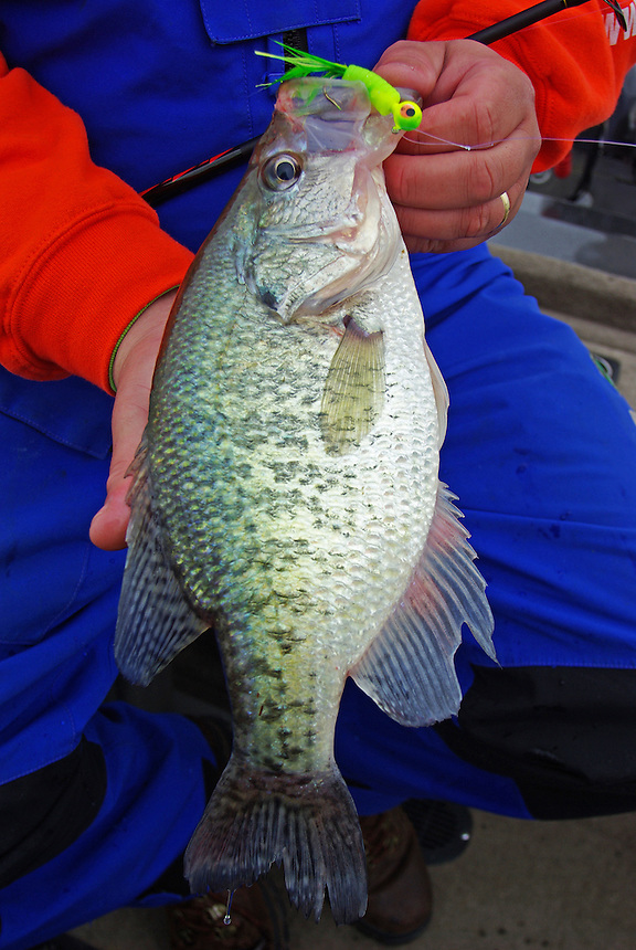 Crappie caught on jig