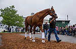 BALTIMORE, MD - MAY 16:  Justify with trainer <br /> Bob Baffert off walks off the van to throngs of media at Pimlico Racecourse on May 16, 2018 in Baltimore, Maryland. (Photo by Alex Evers/Eclipse Sportswire/Getty Images)