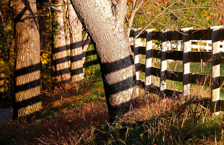 A fence casts shadows on nearby trees in Louisa County, Virginia. Photo/Andrew Shurtleff