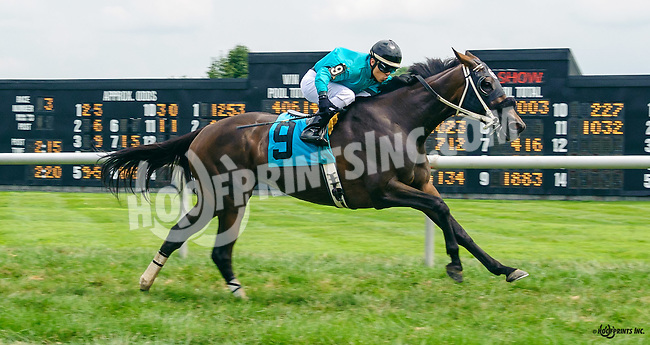 Scorpion Aly winning at Delaware Park on 8/6/16