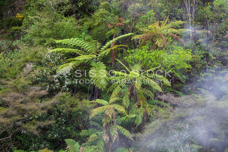 Waimungu Volcanic Valley, Rotorua, New Zealand - stock photo, canvas, fine art print