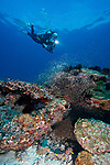 Coral reef, Triton Bay, Indonesia