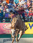Steve Peebles rides in the Bareback Bronc event during the Reno Rodeo in Reno, Nevada on Saturday, June 23, 2018.