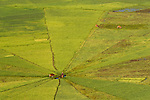 Spiderweb rice field, Manggarai, Flores