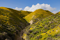 Wildflowers bloom in the Temblor Range at Carrizo National Monument in California.