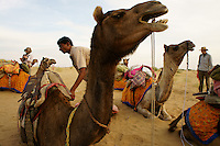 Camel trekking group resting in the desert dunes 40km west of Jaisalmer,Rajastan, India