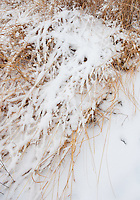 Fresh snow covers grasses in the Schulenburg Prairie at the Morton Arboretum in DuPage County, Illinois