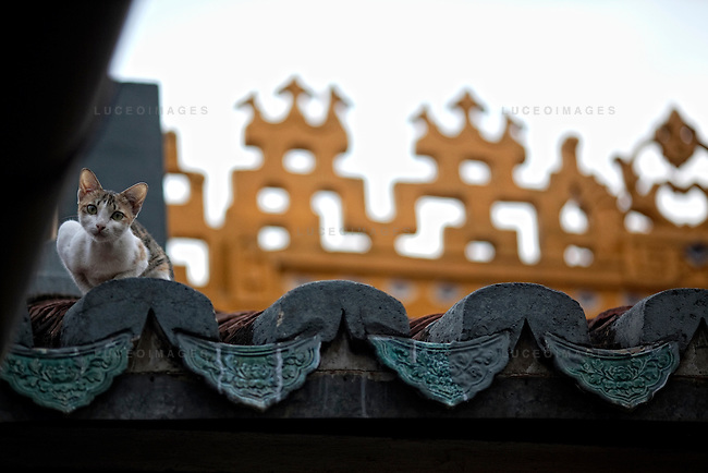 A cat walks the roof of the Giac Lam Pagoda in Tan Binh District in Ho Chi Minh City, Vietnam. Photo taken Tuesday, May 4, 2010....Kevin German / LUCEO